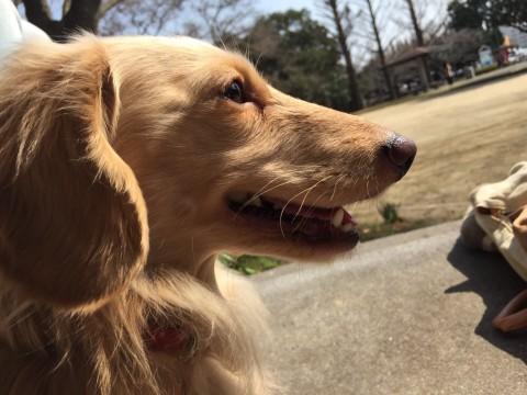 愛犬(∪︎・ω・∪︎)の写真