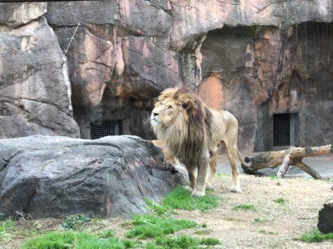 「動物園」の写真