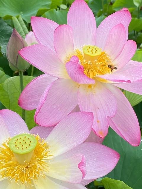 【誕生花🌺】の写真