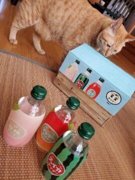 「果実サイダー猫を添えて」の写真
